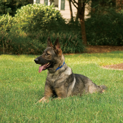 The Best Electric Dog Fence Installation Services